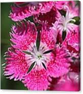 Dianthus Cross Canvas Print
