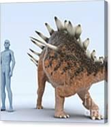 Dinosaur Kentrosaurus Canvas Print