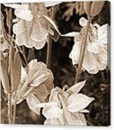Double Columbine Named Light Blue Canvas Print