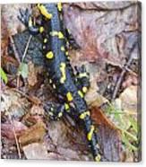 Fire Salamander Canvas Print