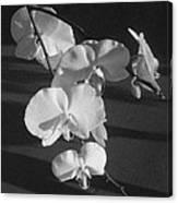 7 Flower Orchid Canvas Print