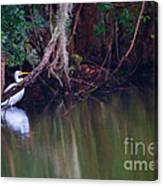 Great White Heron At Waters Edge Canvas Print