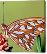 Gulf Fritillary Butterfly Canvas Print