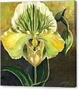 Ladyslipper Orchid Canvas Print