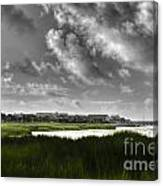 Southern Tall Marsh Grass Canvas Print
