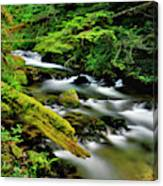 Usa, Oregon, Mt Hood National Forest Canvas Print