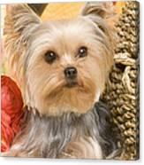 Yorkshire Terrier Dog Canvas Print