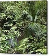 Jungle 5 Canvas Print