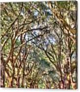 Plantation Allee Of Oaks Canvas Print