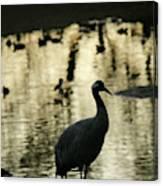 Common Cranes At Gallocanta Lagoon Canvas Print