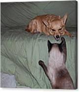 Foxy And Ninja Canvas Print