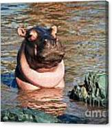 Hippopotamus In River. Serengeti. Tanzania Canvas Print
