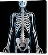 Human Skeleton, Artwork Canvas Print