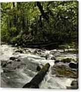 Jungle Stream Canvas Print