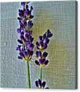 Lavender On Linen Canvas Print