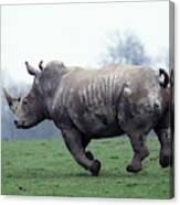 Rhinoceros Blanc Ceratotherium Simum Canvas Print