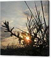 Sunshine On Raven Beach Canvas Print