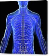 The Nervous System Canvas Print