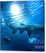Underwater View Canvas Print