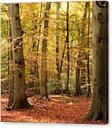Vibrant Autumn Fall Forest Landscape Image Canvas Print