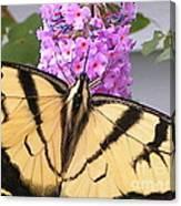 #859 D480 Swallowtail 2010.jpg Canvas Print