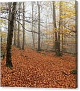 In The Autumn Forest Canvas Print