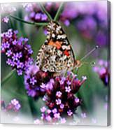 American Painted Lady Butterfly Canvas Print