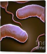 Cholera Bacteria Canvas Print