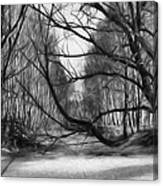 9 Black And White Artistic Painterly Icy Entrance Blocked By Braches Canvas Print