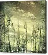 Reed Grass Canvas Print