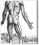 Vesalius: Muscles, 1543 Canvas Print