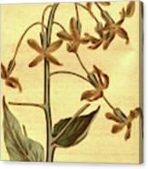 Botanical Print By Sydenham Teast Edwards 1768 – 1819 Canvas Print