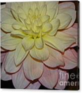 #928 D809 Dahlia Pink White Yellow Dahlia Thoughts Of You Canvas Print