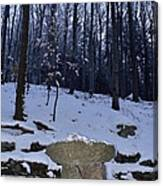 Stone Altar In The Woods Canvas Print