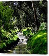 A Babbling Brook Canvas Print
