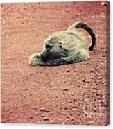 A Baboon On African Road Canvas Print