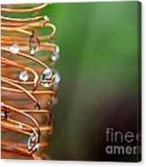 A Banksia Flowers Hold On Water Canvas Print
