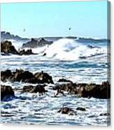 Seascape And Sea Gulls Canvas Print