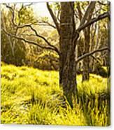 A Bare Tree Canvas Print