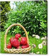 A Basket Of Strawberries Canvas Print