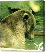 A Bear Bath Canvas Print