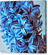 A Beauty In Blue Canvas Print