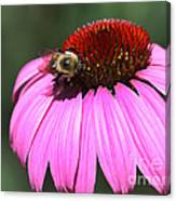 A Bee On The Highline Canvas Print