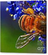 A Bee's Life Canvas Print