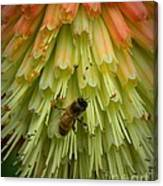 A Bee's Work Is Never Done Canvas Print