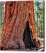A Big Tree Canvas Print