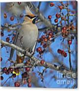 A Bird For Its Crest.. Canvas Print