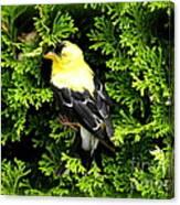 A Bird In The Bush Canvas Print