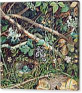 A Birds Nest Among Brambles Canvas Print