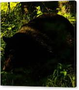 A Black Bear Canvas Print